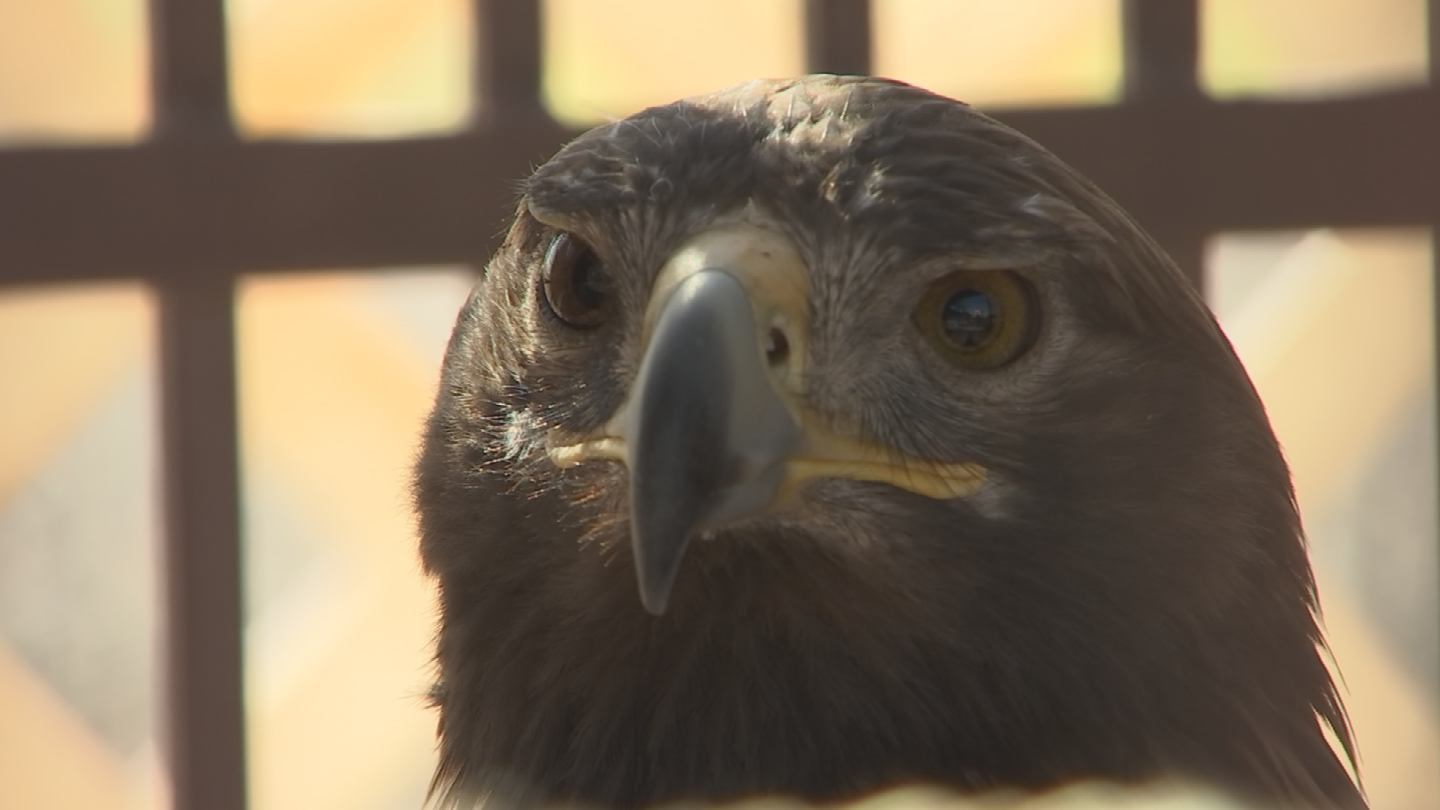 Every dollar raised goes a long way in helping these critters in need. (Source: 3TV/CBS 5)