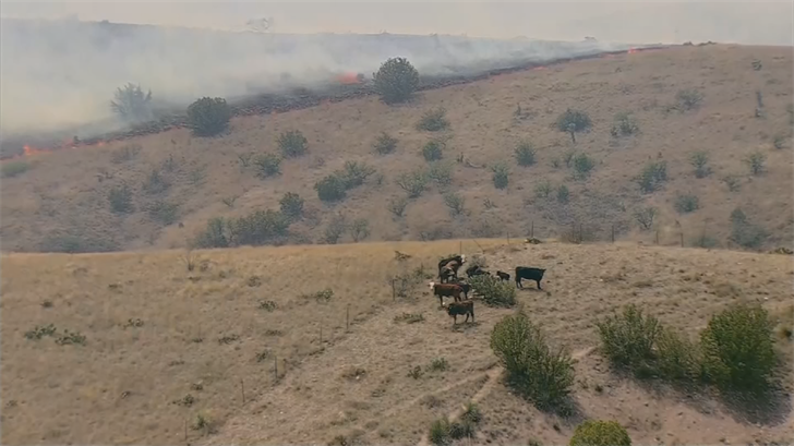 Much of the burned section was grasslands, but the fire also damaged areas where various types of wildlife live.