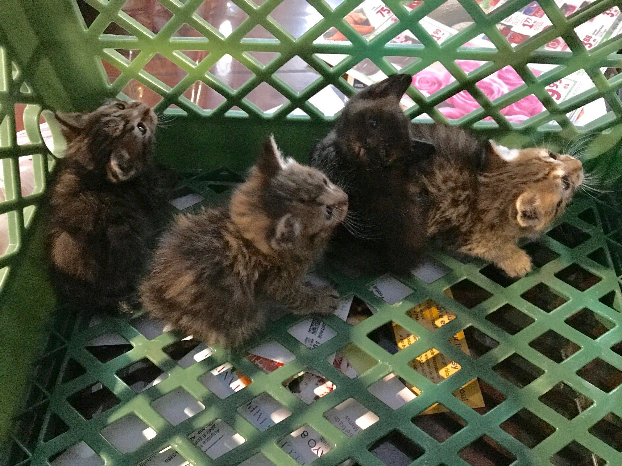 The handful of felines is expected to be OK. (Source: Phoenix Fire Department)