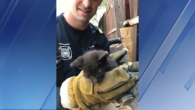 The department said the kittens' mother tried to free herself between the fences but didn't make it. (Source: Phoenix Fire Department)