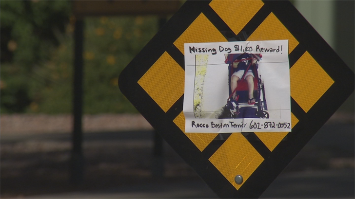 The family has put up signs and checked Valley animal shelters as well as social media. (Source: 3TV/CBS 5)