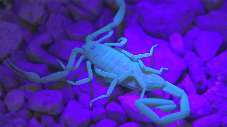An 18-month-old girl suffered a severe allergic reaction after being stung by a scorpion. (Source: 3TV/CBS 5)