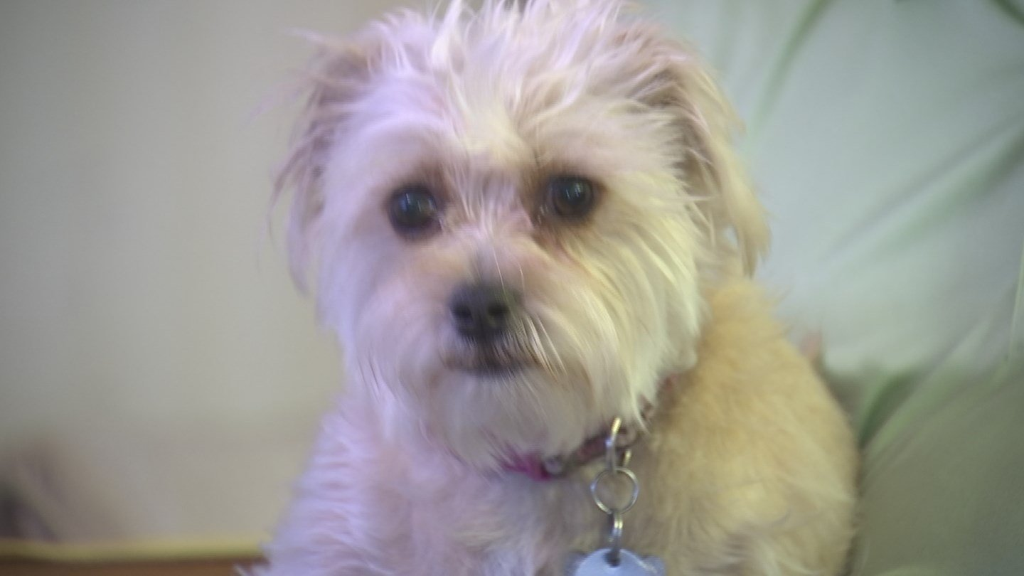 Dentz could lose her dogs over the complaints. (Source: 3TV/CBS 5)