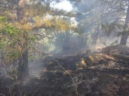 The wildfire is burning through dead needles, brush and trees. (Source: U.S. Forest Service)