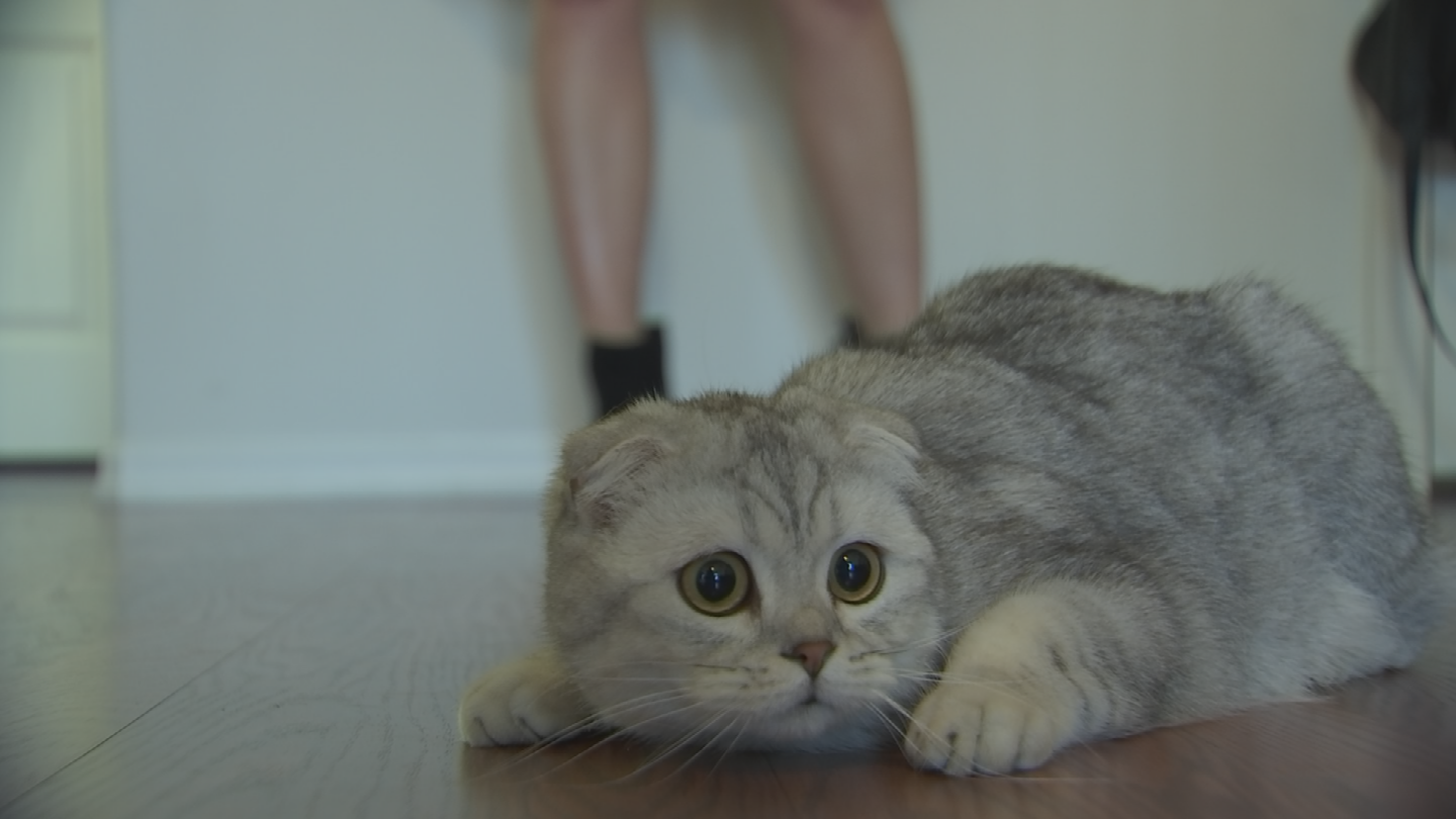 A Scottsdale woman's cat named Butter is enjoying newfound fame on Instagram. (Source: 3TV/CBS 5)