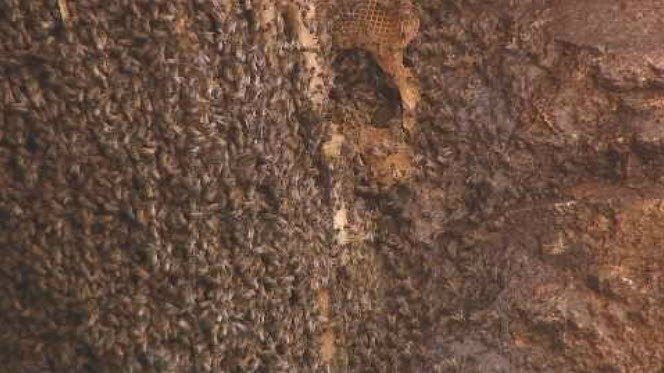 Another hive was recently found along a popular Phoenix hiking trail. (Source: 3TV/CBS 5)