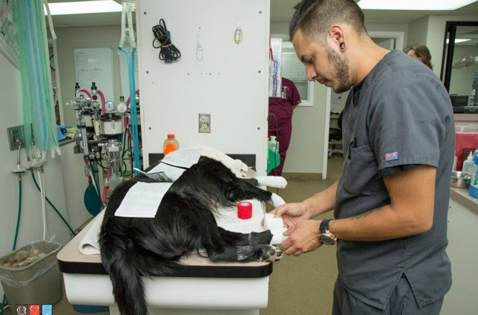 Bruce has been treated for burned paws (Source: Arizona Humane Society)