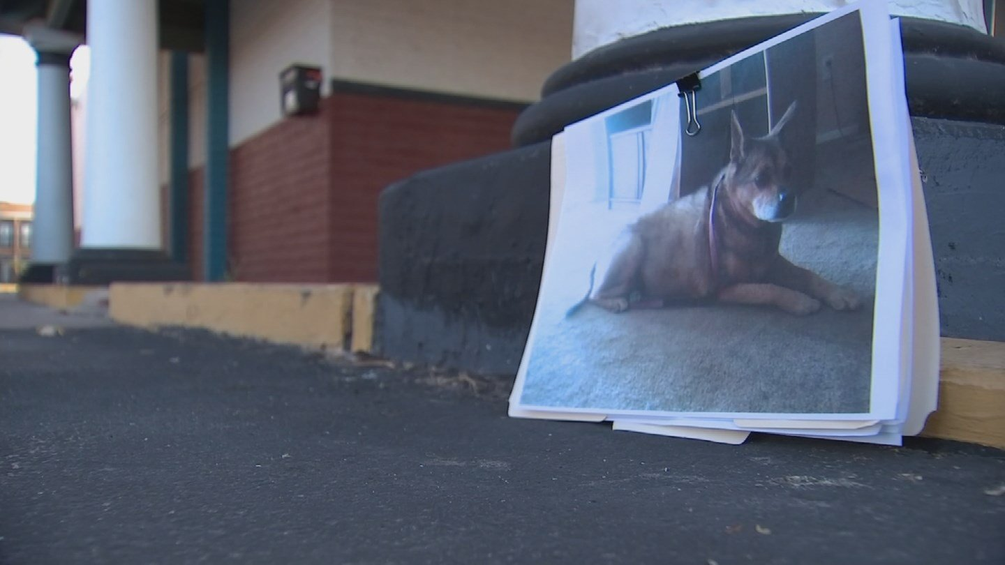 A woman received $13,000 after police officers in Mesa lost her dog. (Source: 3TV/CBS 5)