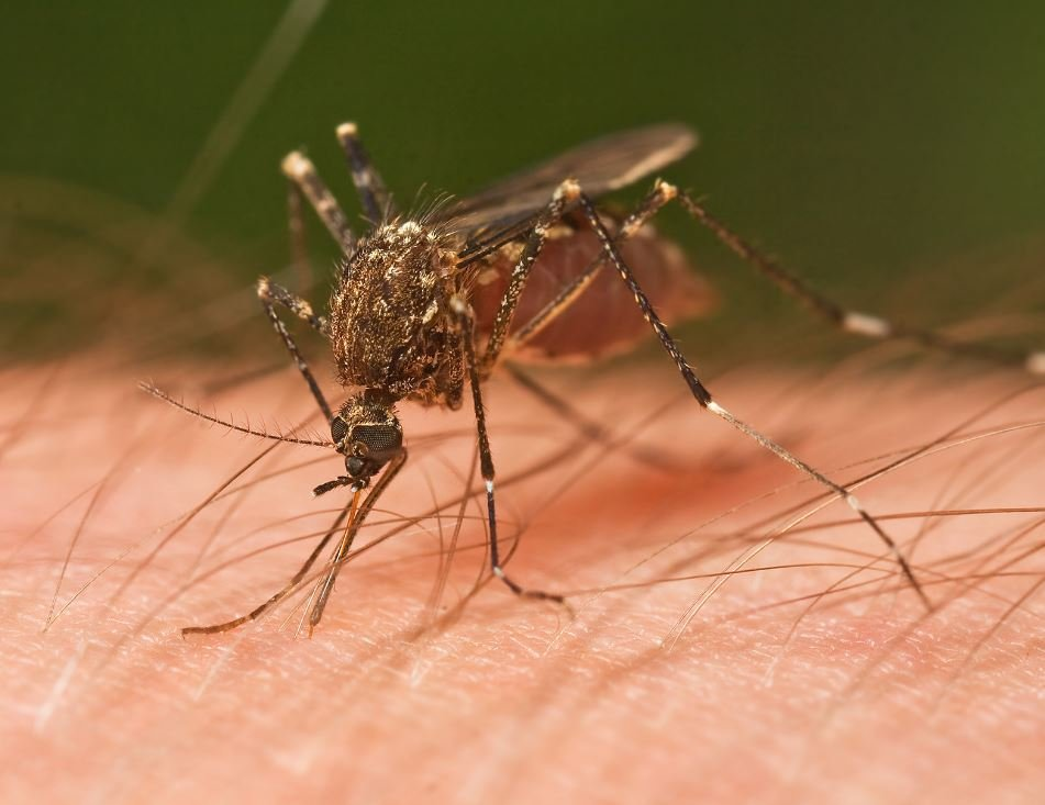 Mosquitoes have become a major problem across the Valley, with so many people leaving standing water in and around their homes and apartments. (Source: 3TV/CBS 5)