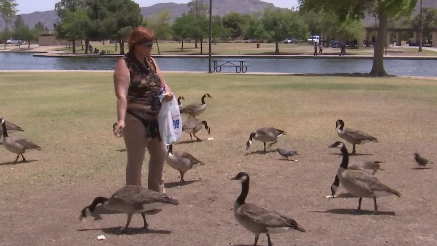Animal welfare advocates have hounded city leaders to take measures to protect the ducks and geese they say are injured or killed in traffic as they flee from the sound of fireworks. (Source: 3TV/CBS 5)