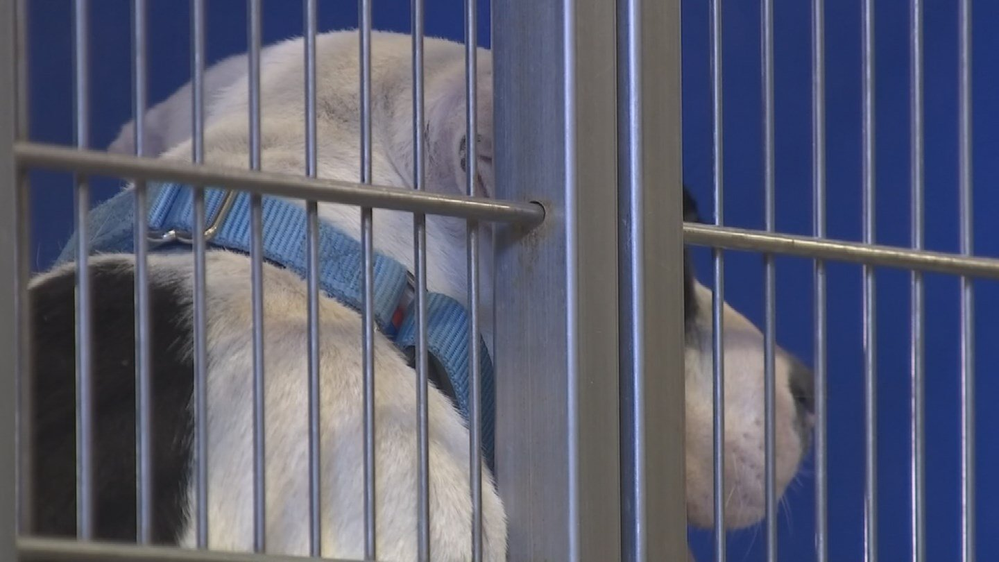 The Arizona Animal Welfare Leagueand many veterinarians are now carrying the two-part vaccine. (Source: 3TV/CBS 5)