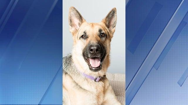 Debbie Hunsley loves dogs,especially German shepherds. (Source: 3TV/CBS 5)