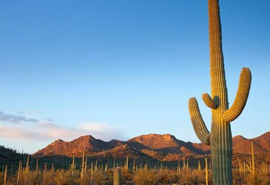 Officials at Saguaro National Park advise hikers to be extremely careful if visiting the park during the hot months. (Source: National Park Service)