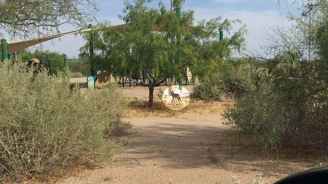 The Arizona Game & Fish Department believes it captured the coyote that bit a girl in Scottsdale. (Source: 3TV/CBS 5)