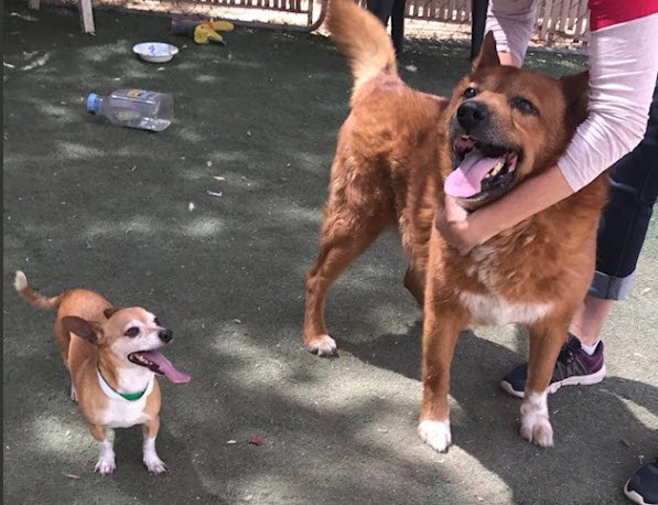 Pair of pups in need of adoption (Source: Viewer photo)