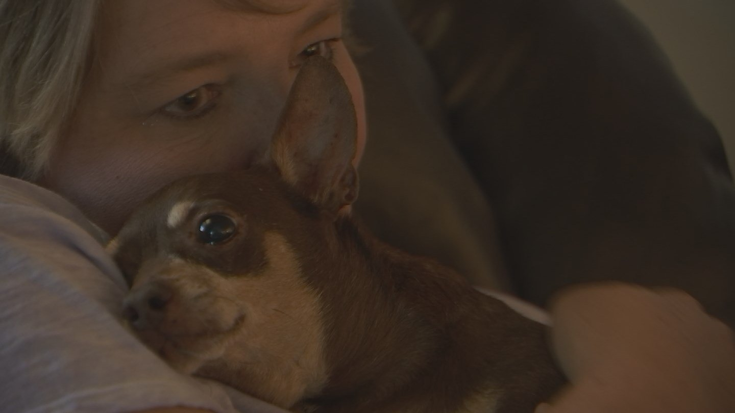 Thieves broke into a Phoenix home stealing several items, including possibly a couple dogs. (Source: 3TV/CBS 5)