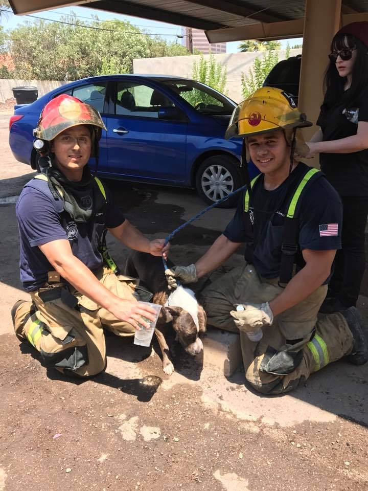 Phoenix fire fighters with a dog rescued from an apartment fire Sunday. (18 June 2017) [Source: Phoenix Fire Dept.]