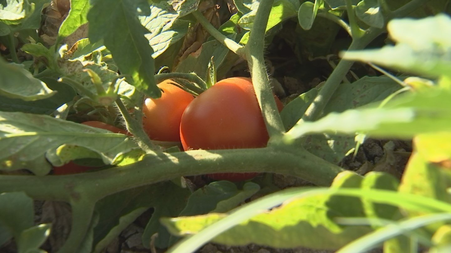 Urban farms have a plan for plants in extreme heat. (19 June 2017) [Sourve: 3TV/CBS 5 News]