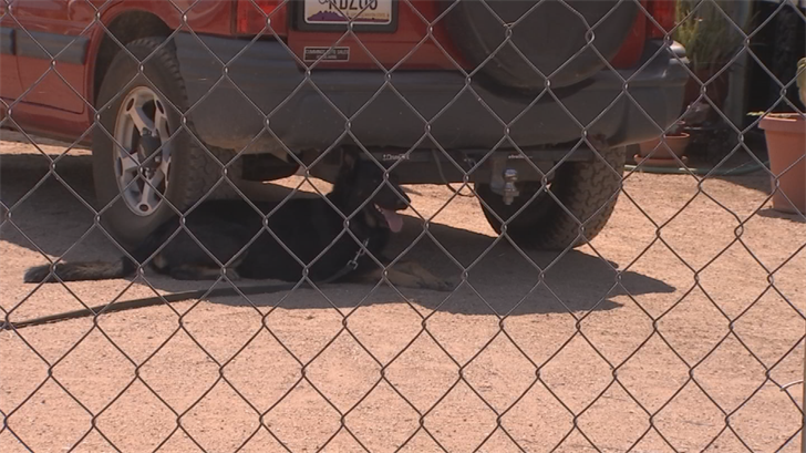 One dog used a car for shade. (Source: 3TV/CBS 5)