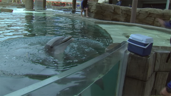 Dolphinaris keeps the water at 75 degrees for the dolphins. (Source: 3TV/CBS 5)