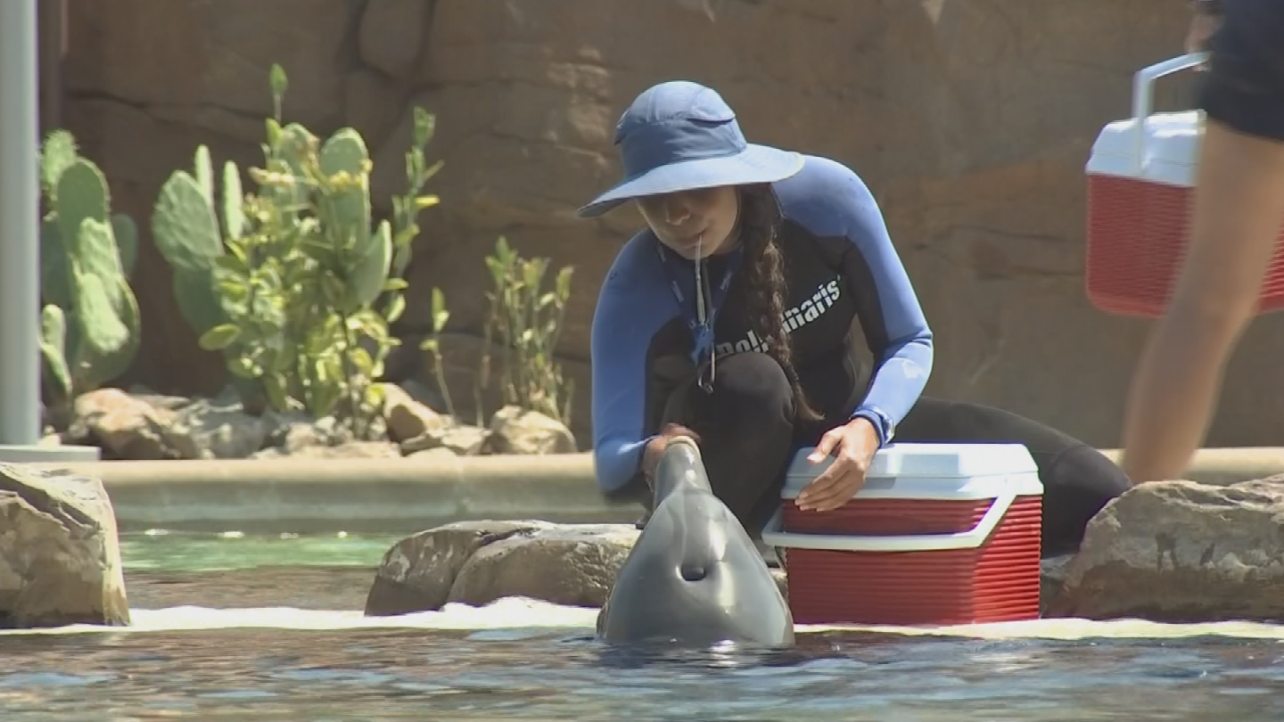 Dolphins have a dorsal fin to help them thermo-regulate. (Source: 3TV/CBS 5)