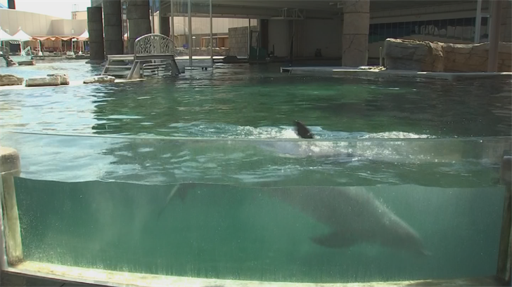 Each of the five pools has areas of shade. (Source: 3TV/CBS 5)