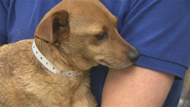 Emergency animal medical technicians with the Arizona Humane Society responded to at least 55 heat-related calls Tuesday. (Source: 3TV/CBS 5)
