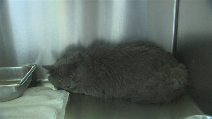 Cooper found a long-haired cat with an internal temperature of 106 degrees. (Source: 3TV/CBS 5)