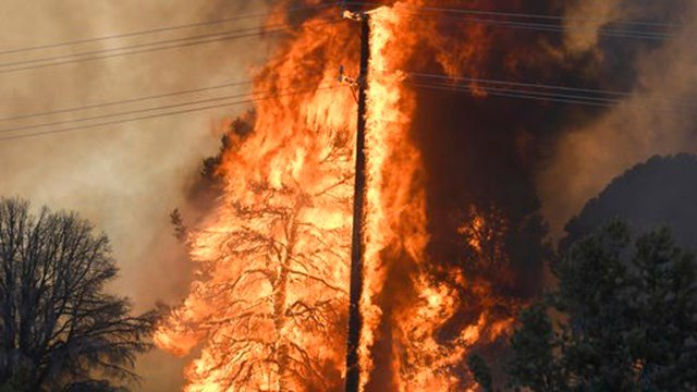 A tree and power pole are consumed by a wildfire near Big Bear, Calif., Tuesday, June 20, 2017. (Source: James Quigg/The Daily Press via AP).