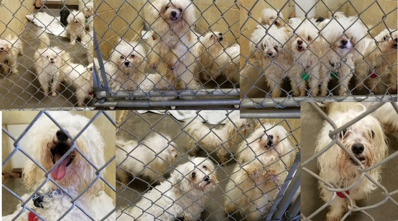 The 20 dogs rescued by the Humane Society of Central Arizona (Source: HSCAZ).