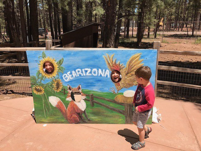 "At Fort Bearizona, there are bear cubs, a ""Birds of Prey"" show, a badger, petting zoo and many more animals. (Source: Paul Horton)"