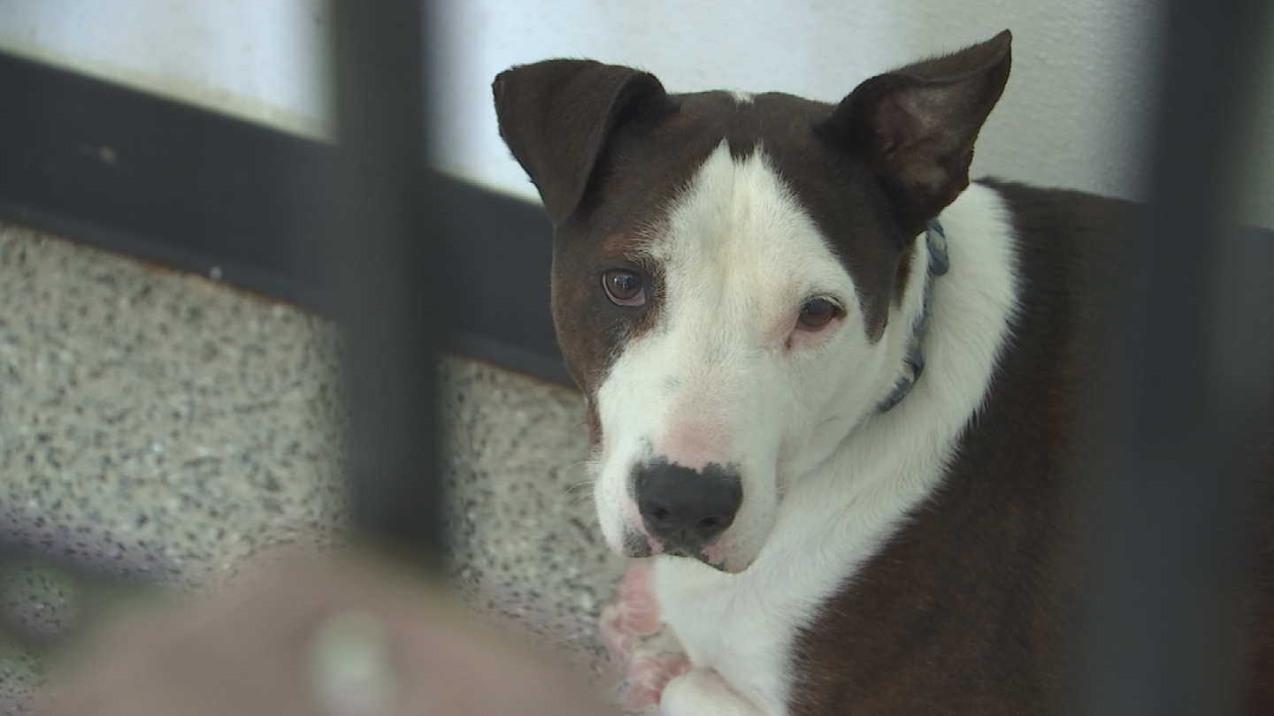 After five years, and settling 4,000 dogs into new homes, Ohana closes its doors in three days. (Source: 3TV/CBS 5)