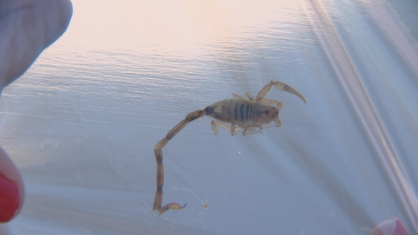 An Ahwatukee grandmother is out of the hospital and back home after a run-in with a scorpion in her bed.(Source: 3TV/CBS 5)