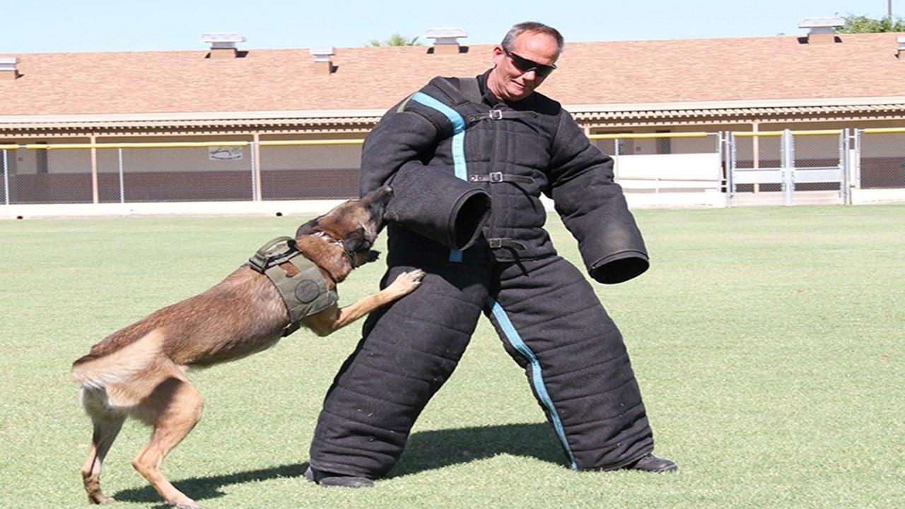 Buckeye Police Dept. K9 Officer Cido and his handler, Officer Smith. (Source: City of Buckeye)