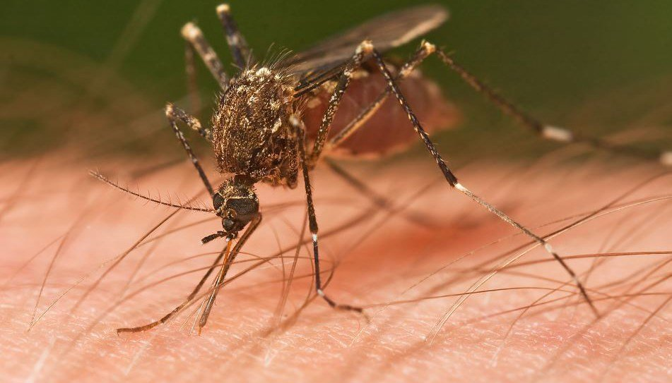 Monsoon 2017 is approaching and officials with the Maricopa County Environmental Services Department want you to do your part to prevent the spread of mosquito-borne diseases. (Source: 3TV/CBS 5)