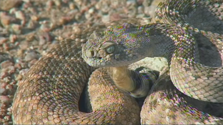 A close call for one north Scottsdale woman and her two tiny dogs has her warning others about rattlesnakes, and what attracts the reptiles to your yard. (Source: 3TV/CBS 5)
