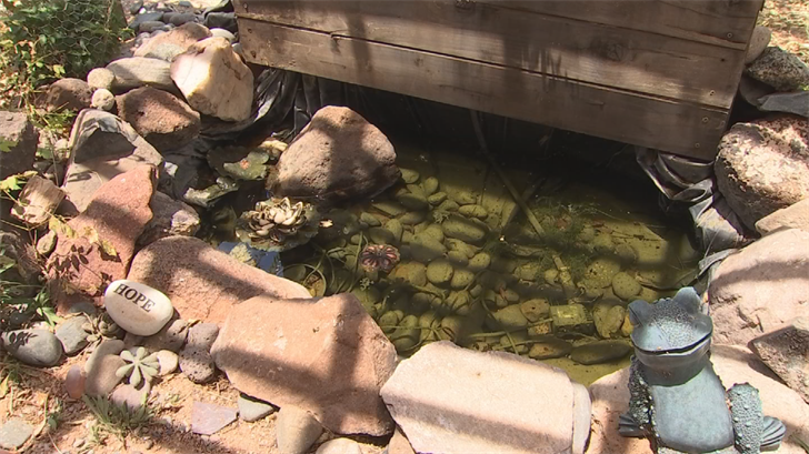 Rattlesnakes like water. Something Rondone found out the hard way after finding one of the rattlesnakes slithering to her backyard water feature. (Source: 3TV/CBS 5)