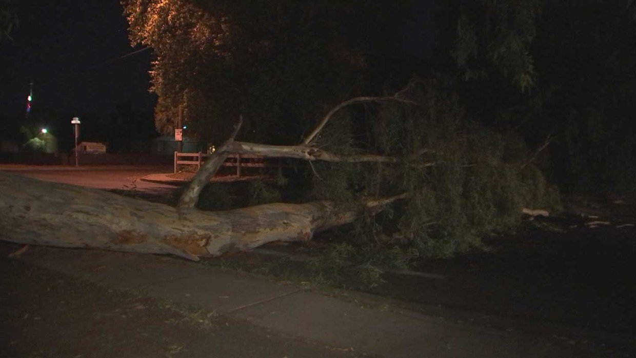Tree down after summer storm in Phoenix. (7 July 2017) [Source: 3TV/CBS 5]