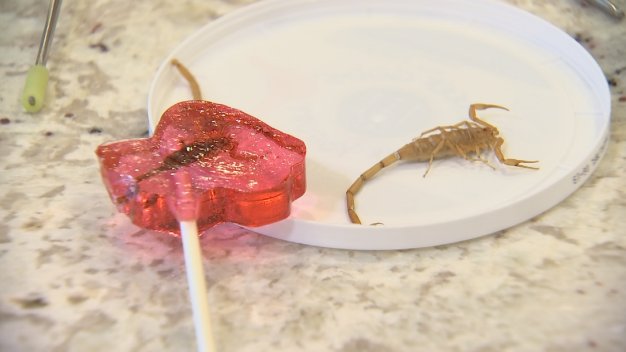 Scorpion Sucker (Source: 3TV/ CBS 5)