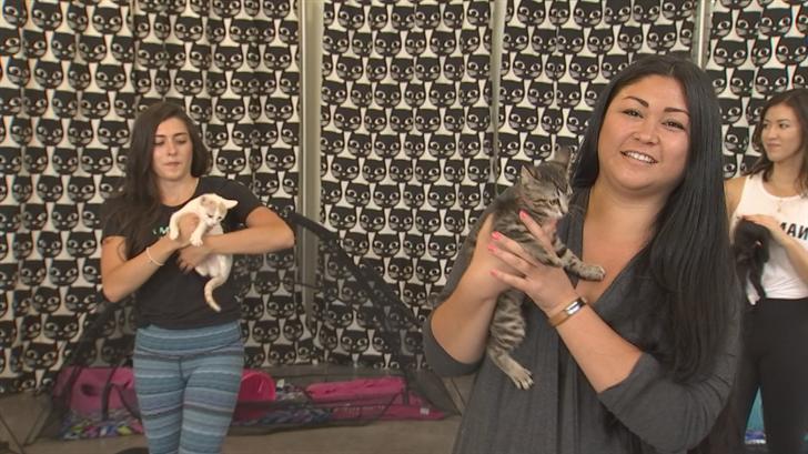 Strike the purrrrrrfectpose with little balls of fur at Scottsdale Quarter. (Source: 3TV/CBS 5)