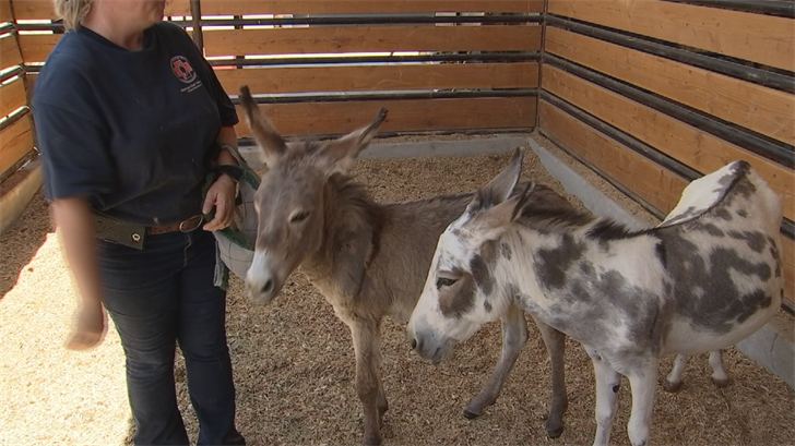 Phoenix Police say animal cruelty calls spike in the summer months. It's a phenomenon also experienced by an equine rescue that helps law enforcement save sick and injured livestock and prosecute owners. (Source: 3TV/CBS 5)