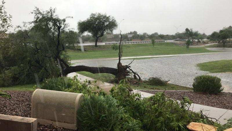 A storm generated strong winds that knocked over trees in Peoria. (Source: Viewer Photo)