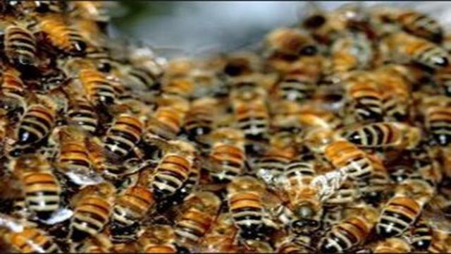 Stock image of bees. (Source: 3TV/ CBS 5)