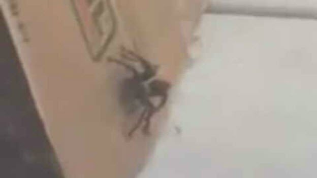 One sister grabbed a phone and recorded the tarantula. (Source: 3TV/CBS 5)