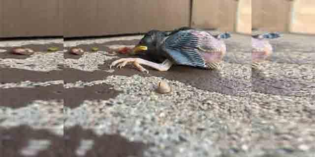 Flagstaff bird (Source: Flagstaff Police Department)