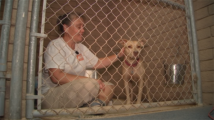 Over the years, Jenn Cline has helped find homes for hundreds of dogs and cats that at one time were considered unadoptable. (Source: 3TV/CBS 5)