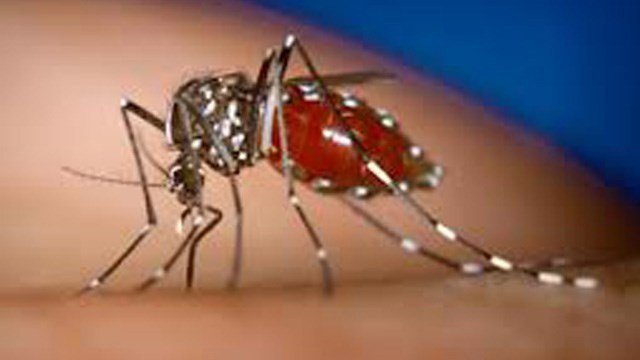 Little Elm resident first in county to contract West Nile virus