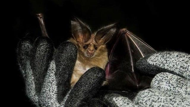 Phoenix bat. (July 21, 2017) [Source: 3TV/CBS5]