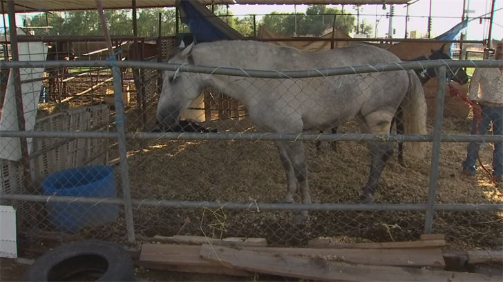 Two horses were hit by a group of gunmen in Laveen. (Source: 3TV/CBS 5)