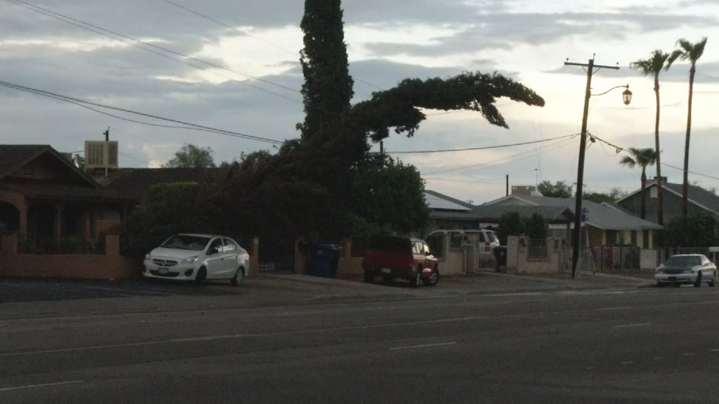 Trees down in Surprise (Source: 3TV/CBS 5)